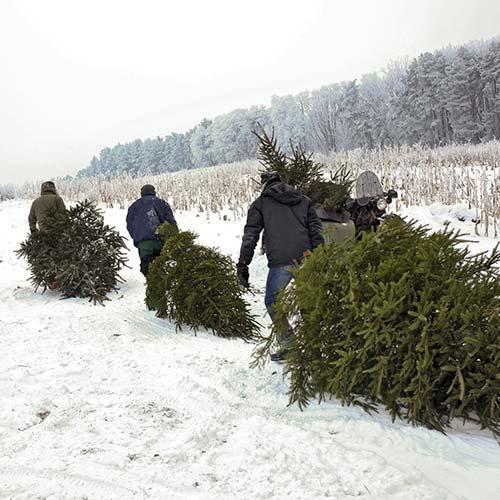 Weihnachtbaum - Foto: Lehmann